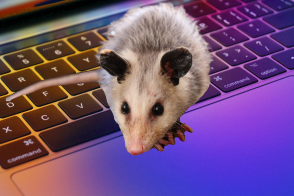 Possum overlayed on a keyboard